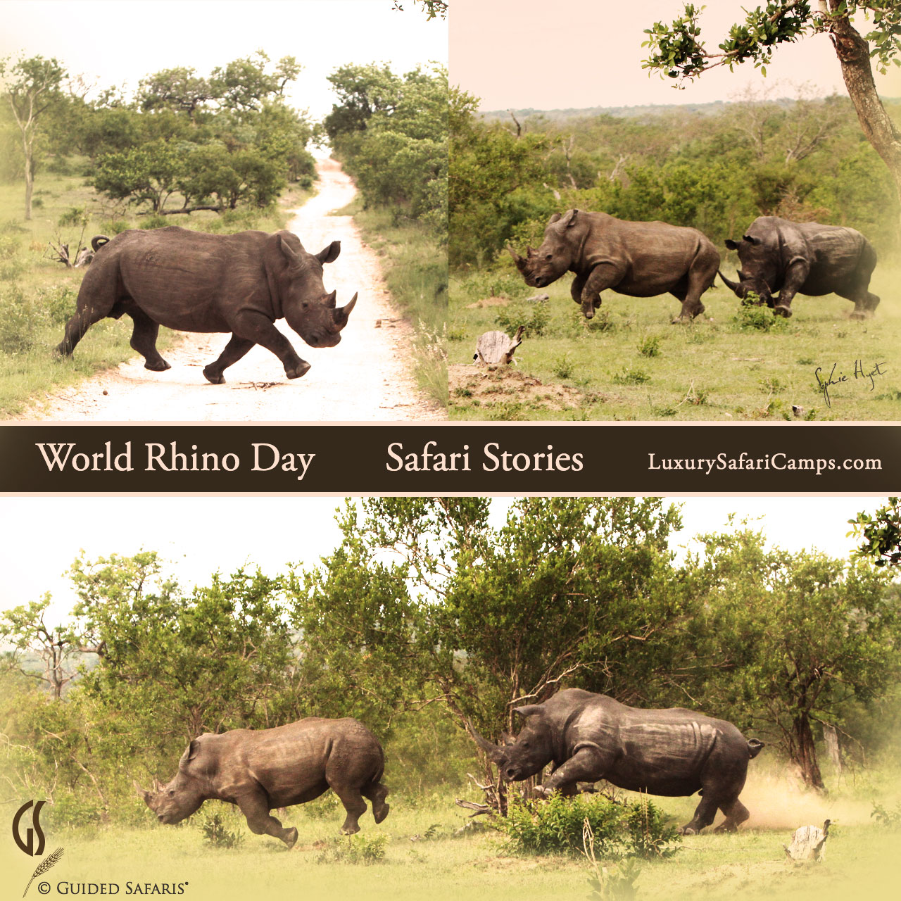 Wordl Rhino Day 2015 © Sophia Hyet for Guided Safaris, LuxurySafariCamps.com
