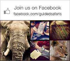 Follow Guided Safaris on Facebook