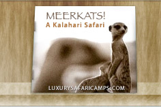 Jacks Camp - Kalahari