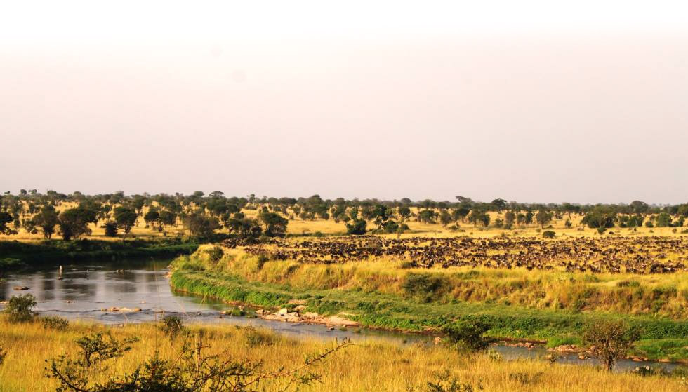 Singita Wildebeast Migration