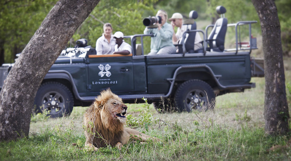 Londolozi Game Viewing