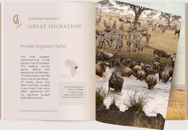 Luxury Migration Safari