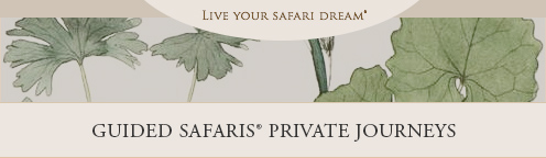 Guided Safaris Private Journeys