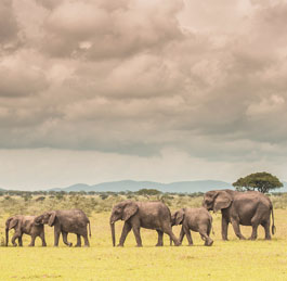 Guided Safaris Tanzania