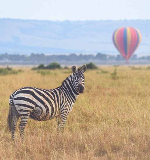 The Great Rift Valley - Private Birding Safari with big game viewing