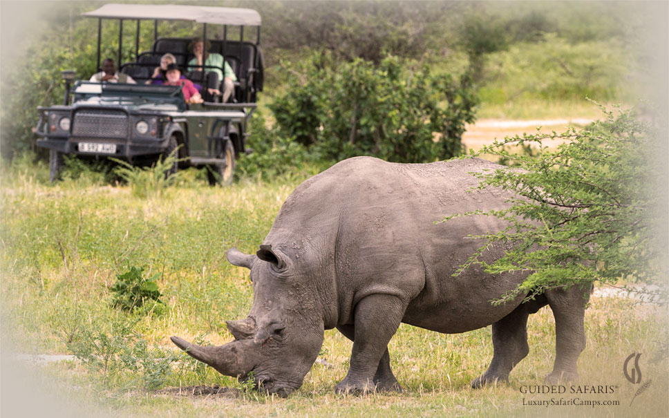 Guided Safaris, Conservation