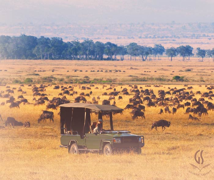 Signature Guided Safaris®, Migration Safari