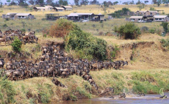 Mara River Tented Camp Great Migration Crossing