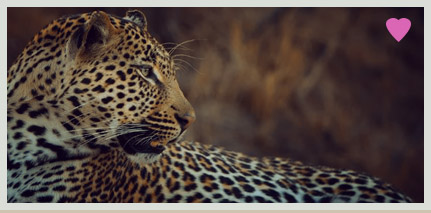 Singita - Private Sabi Sands
