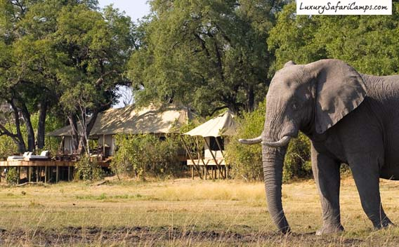 Elephants at Selinda, Zarafa Camp